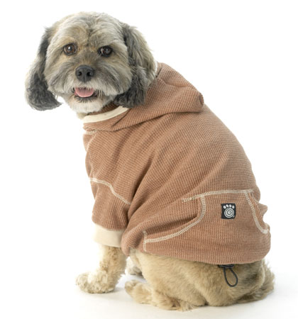 Dog waffle weave hoodie color spice