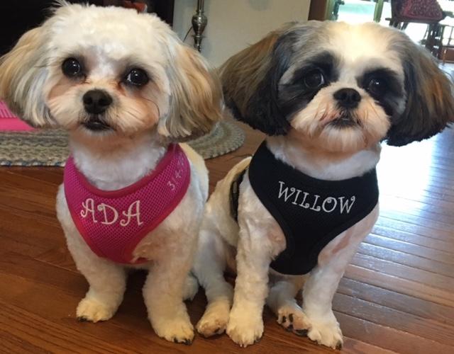 ADA&WILLOW