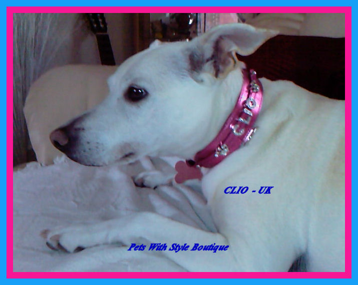 Clio Bling Collar - UK