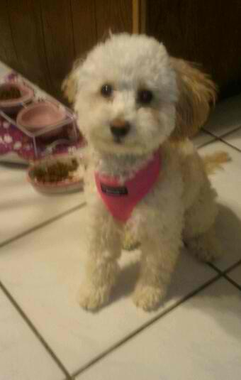 Coco Pink Harness