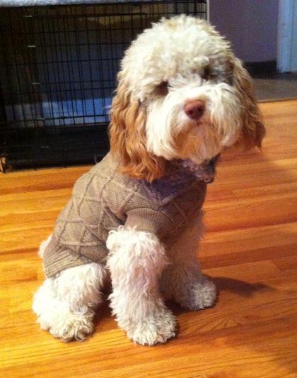 Frankie in European cut sweater