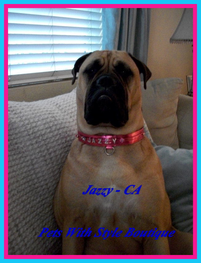 Jazzy in Bling Collar