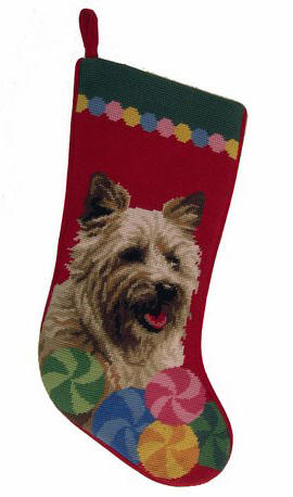 NP Stocking Cairn Terrier