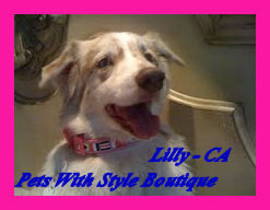 Lily CA