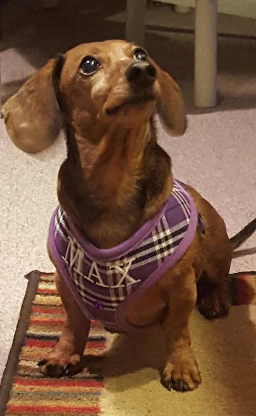 Max Purple Plaid harness
