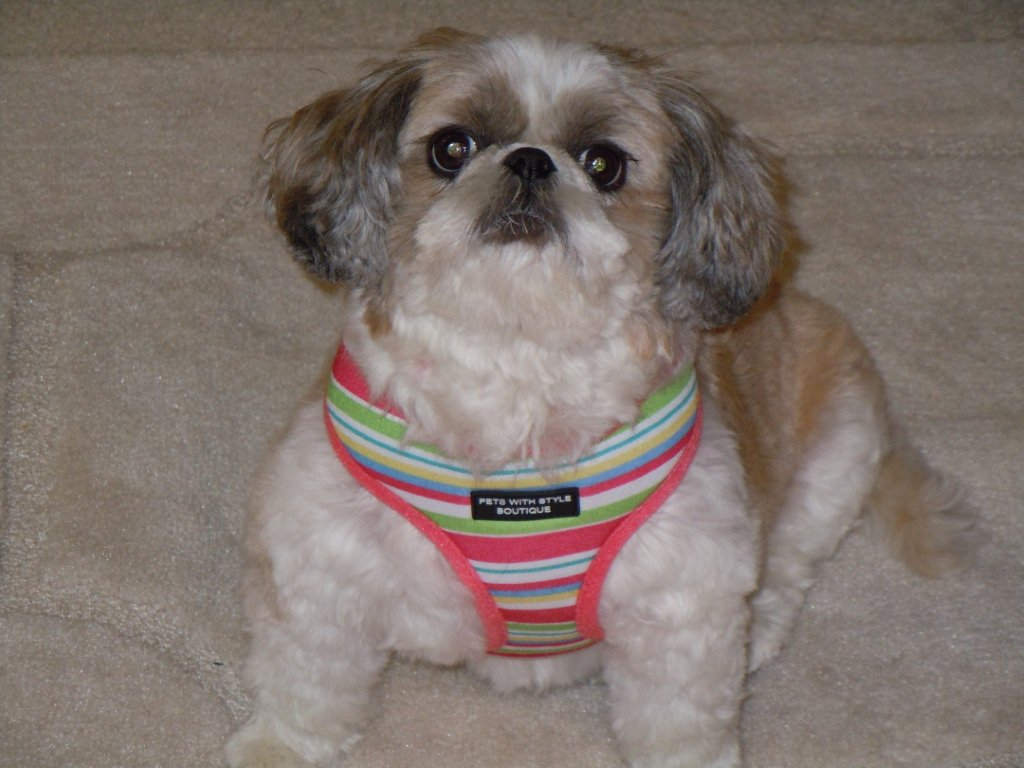 Molly in Striped harness