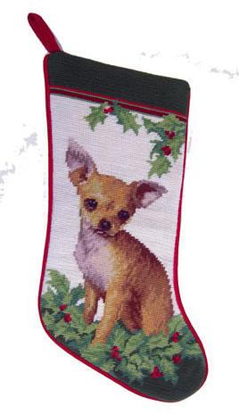 NPStocking Chihuahua ED