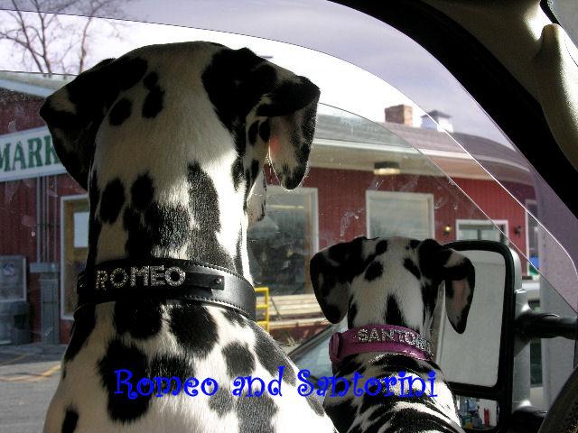 Romeo & Santorini in Bling collars