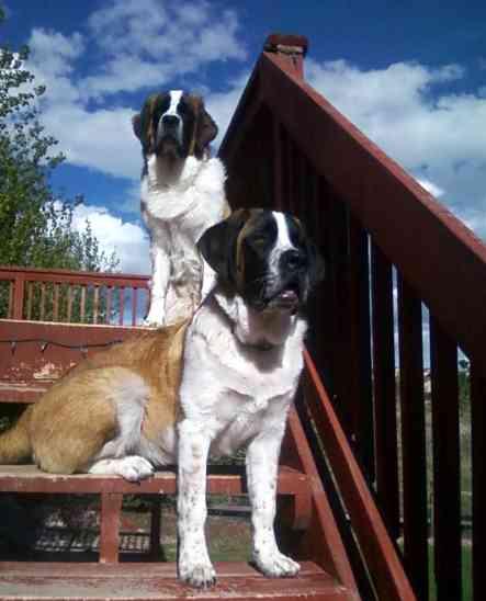 Rudy & Holly