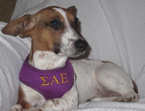Rescue Zinnie Sigma Alpha Epsilon