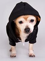 Amer App hoodie Black
