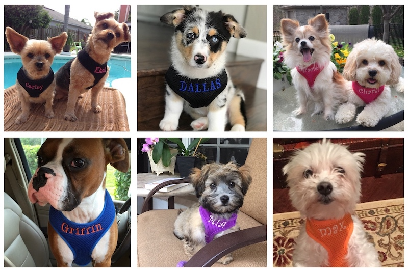 #1 Best Seller Personalized Dog Harness Custom Embroidered S-XL, 9 colors